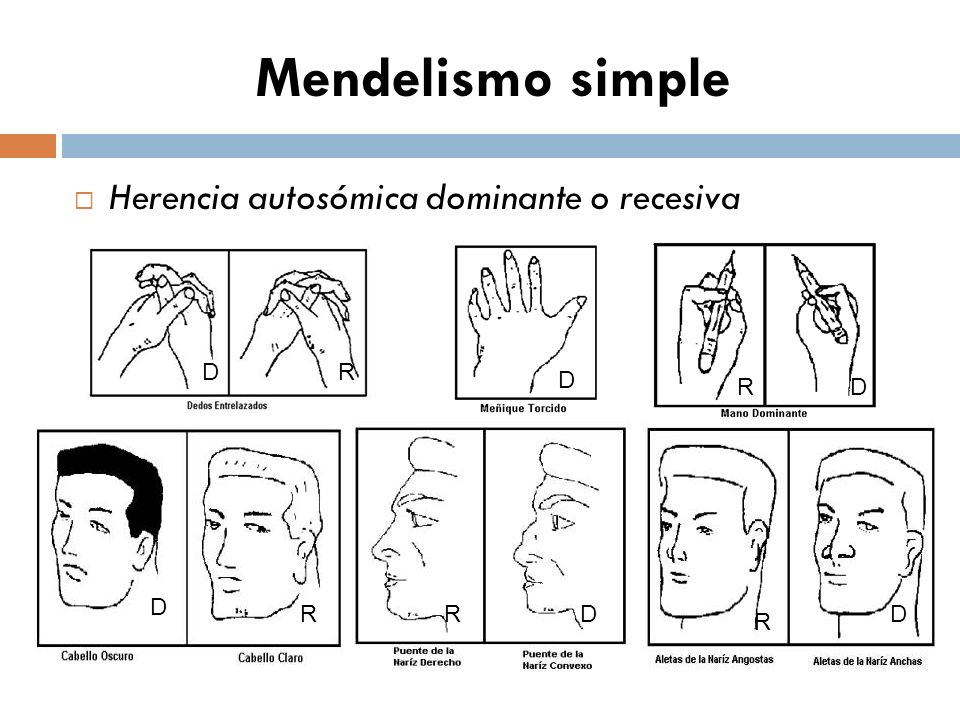 Mendelismo simple Herencia autosómica dominante o recesiva D R D R D R