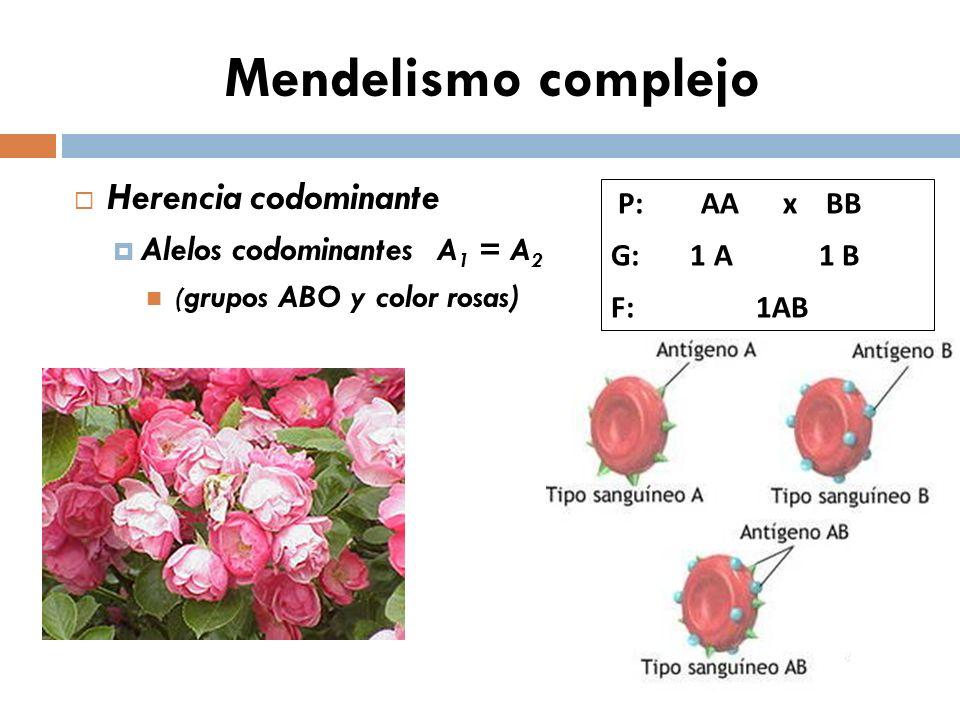 Mendelismo complejo Herencia codominante Alelos codominantes A1 = A2