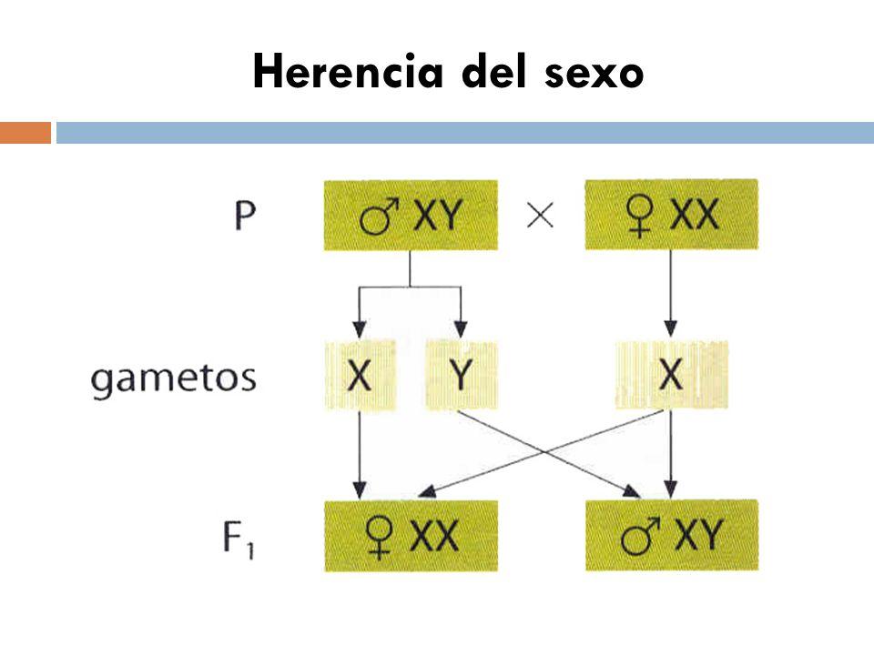 Herencia del sexo