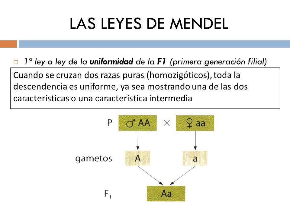 LAS LEYES DE MENDEL 1ª ley o ley de la uniformidad de la F1 (primera generación filial)