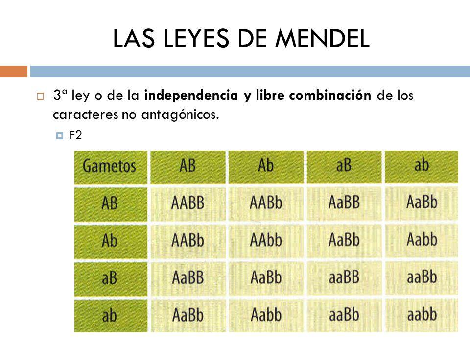 LAS LEYES DE MENDEL 3ª ley o de la independencia y libre combinación de los caracteres no antagónicos.