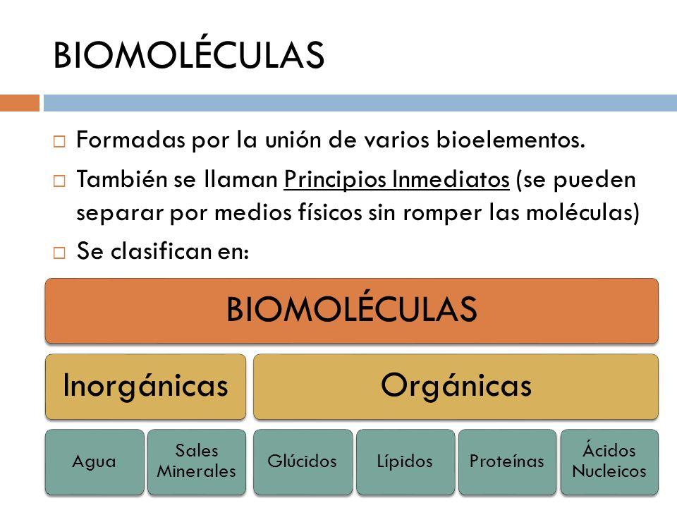 BIOMOLÉCULAS Formadas por la unión de varios bioelementos.