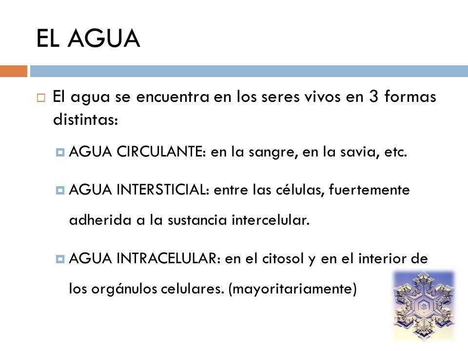 EL AGUA El agua se encuentra en los seres vivos en 3 formas distintas: