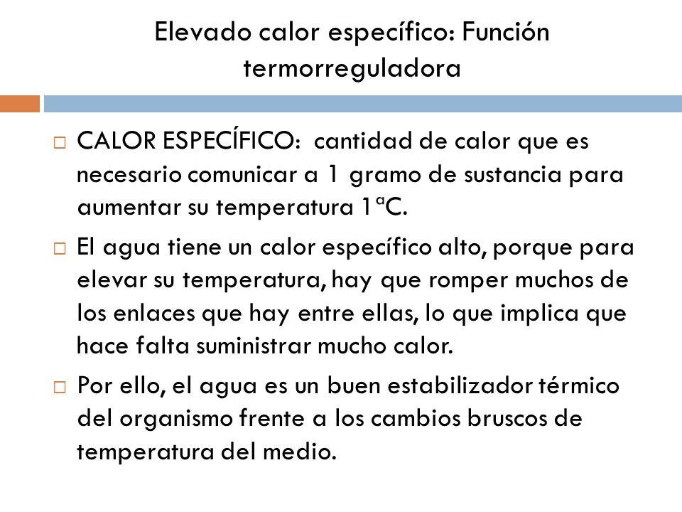 Elevado calor específico: Función termorreguladora