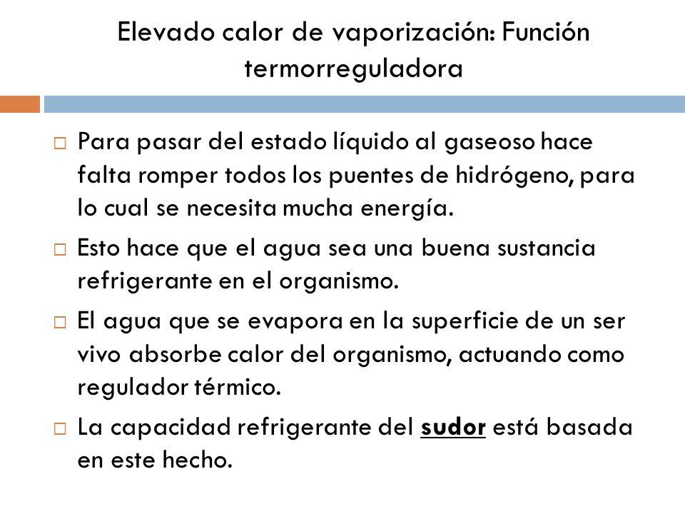 Elevado calor de vaporización: Función termorreguladora