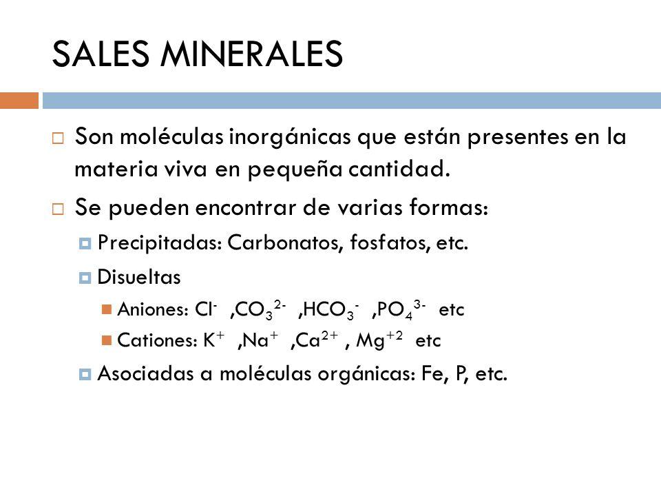 SALES MINERALES Son moléculas inorgánicas que están presentes en la materia viva en pequeña cantidad.