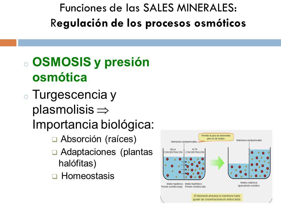Funciones de las SALES MINERALES: Regulación de los procesos osmóticos