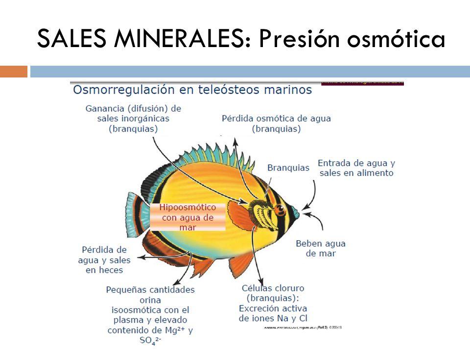 SALES MINERALES: Presión osmótica
