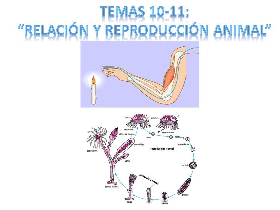 RELACIÓN Y REPRODUCCIÓN ANIMAL