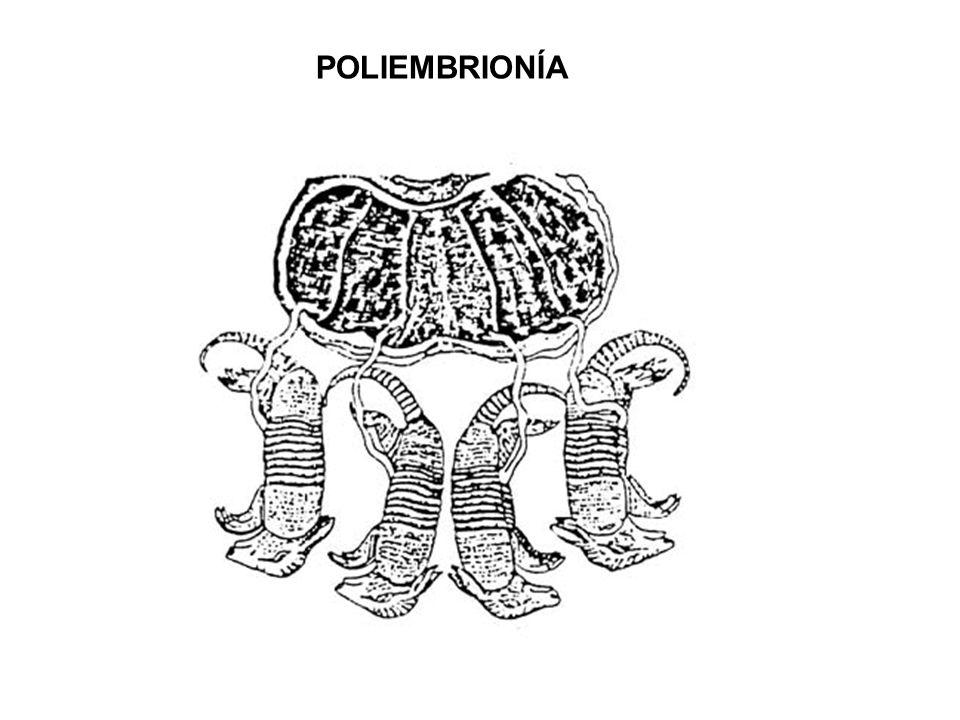 POLIEMBRIONÍA
