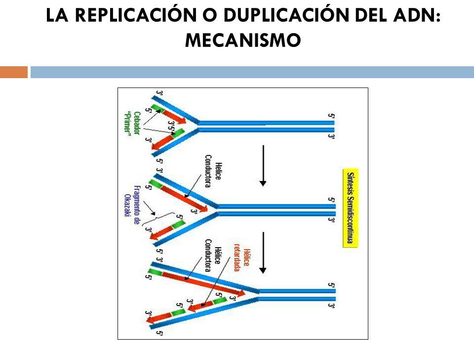 LA REPLICACIÓN O DUPLICACIÓN DEL ADN: MECANISMO