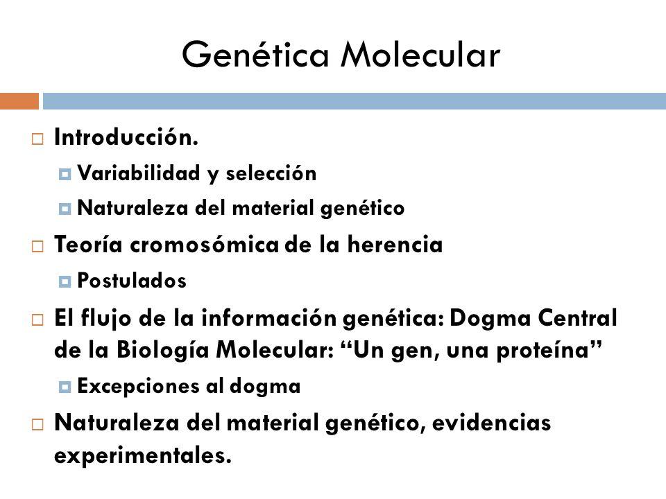 Genética Molecular Introducción. Teoría cromosómica de la herencia