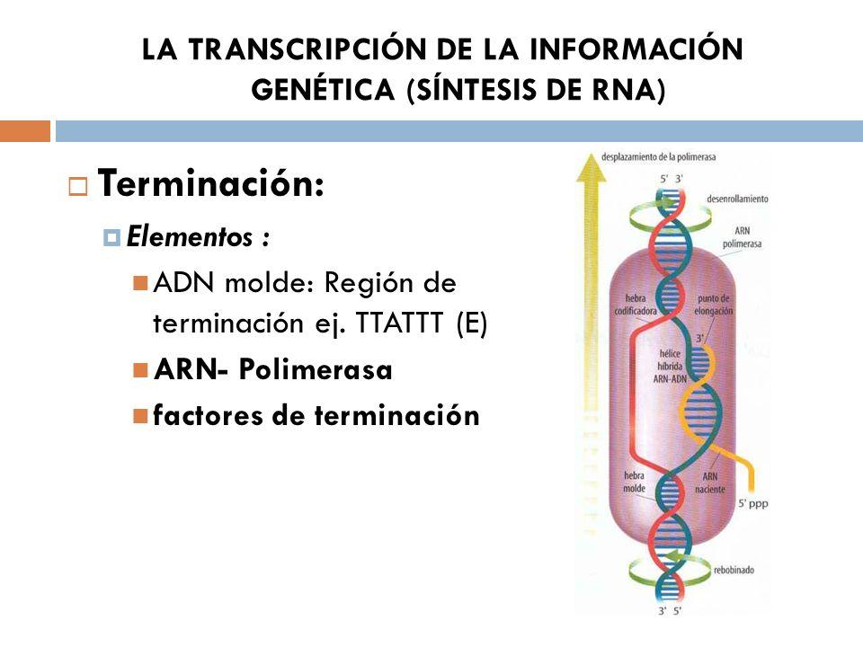 LA TRANSCRIPCIÓN DE LA INFORMACIÓN GENÉTICA (SÍNTESIS DE RNA)