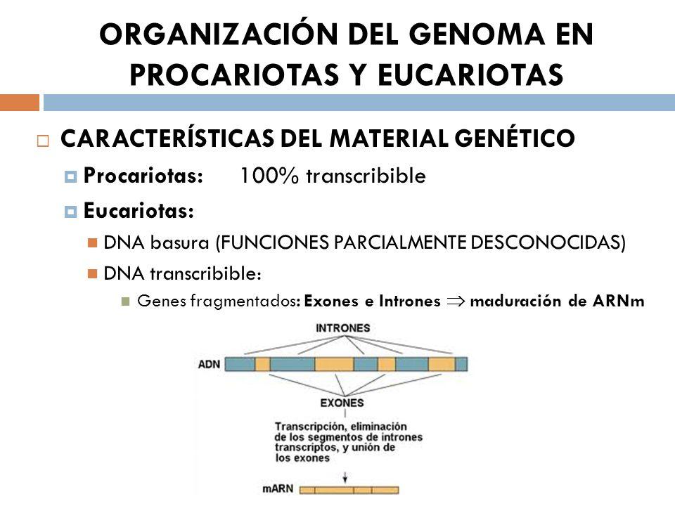 ORGANIZACIÓN DEL GENOMA EN PROCARIOTAS Y EUCARIOTAS