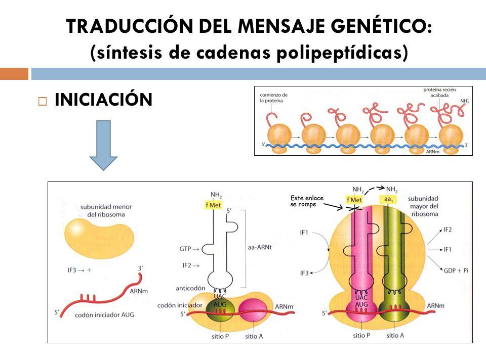 TRADUCCIÓN DEL MENSAJE GENÉTICO: (síntesis de cadenas polipeptídicas)