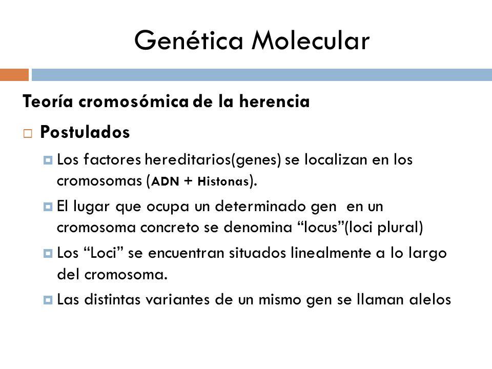 Genética Molecular Teoría cromosómica de la herencia Postulados