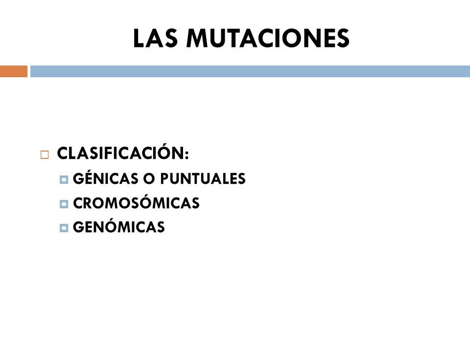 LAS MUTACIONES CLASIFICACIÓN: GÉNICAS O PUNTUALES CROMOSÓMICAS