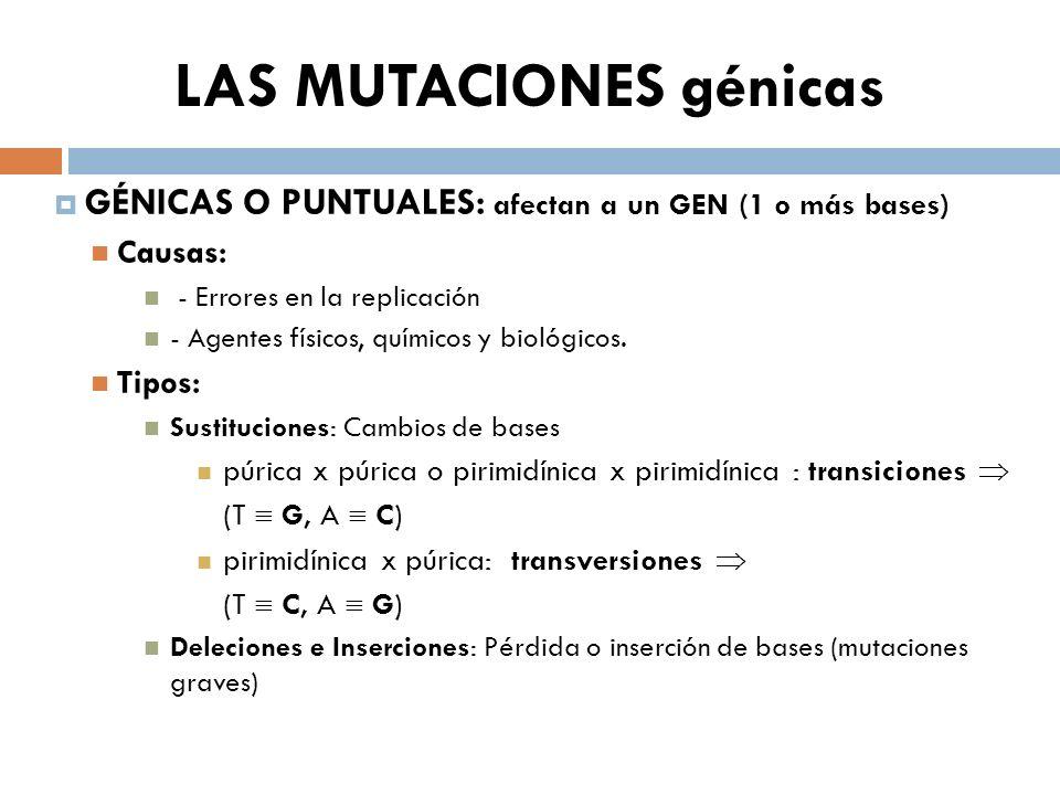 LAS MUTACIONES génicas