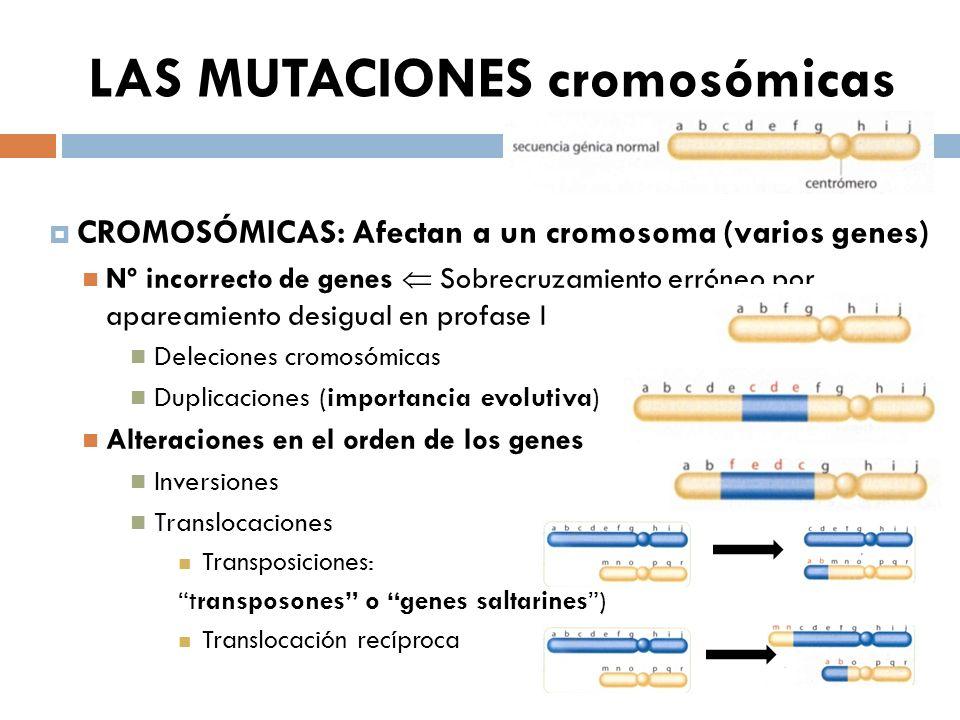 LAS MUTACIONES cromosómicas