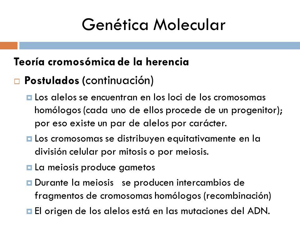 Genética Molecular Teoría cromosómica de la herencia