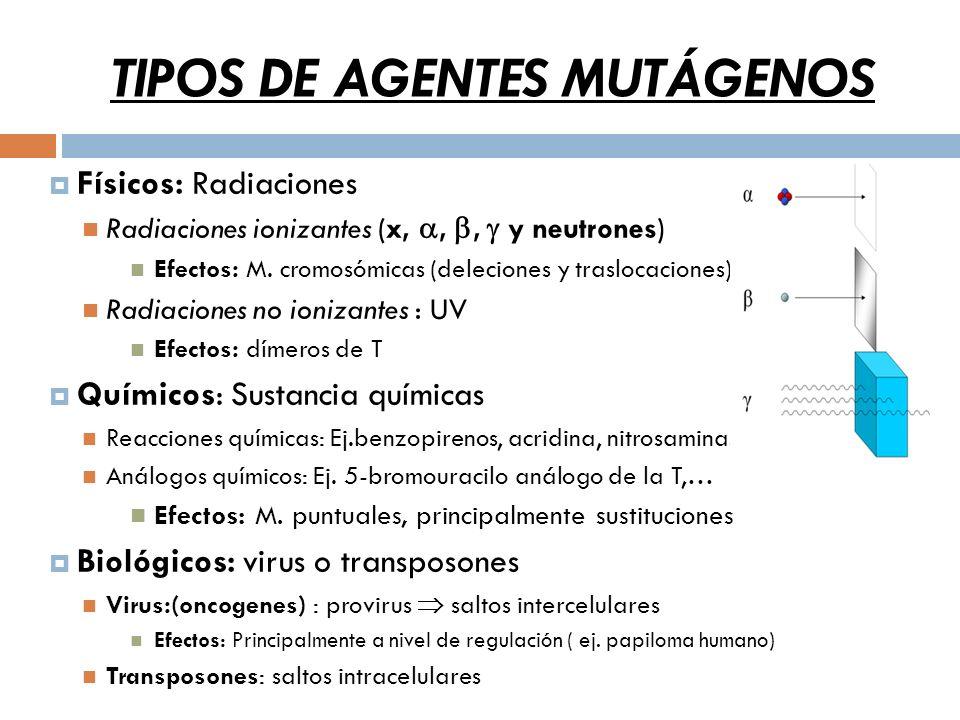 TIPOS DE AGENTES MUTÁGENOS