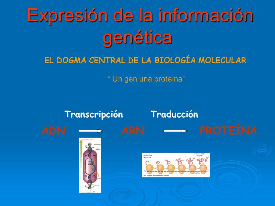 Expresión de la información genética