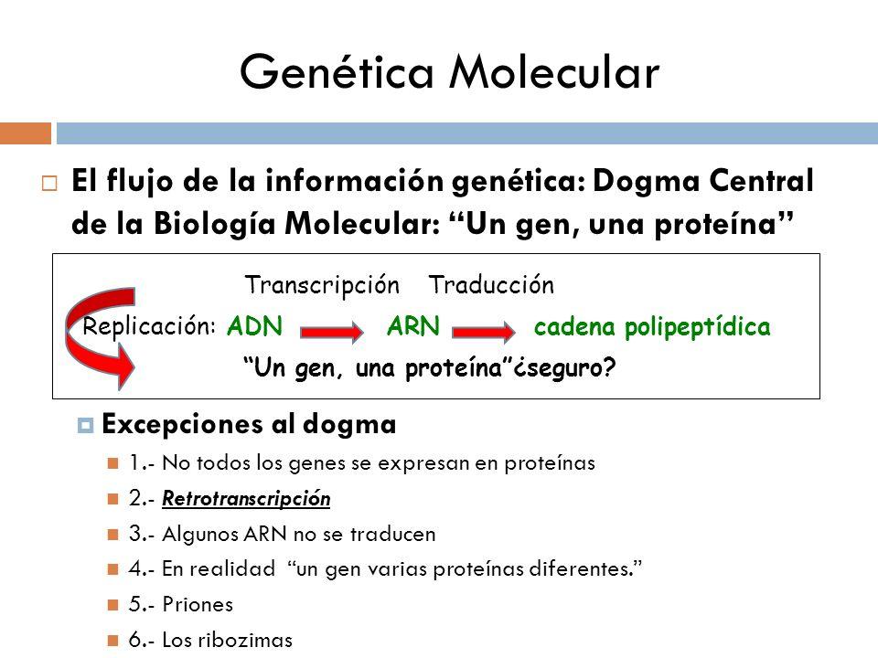 Genética Molecular El flujo de la información genética: Dogma Central de la Biología Molecular: Un gen, una proteína