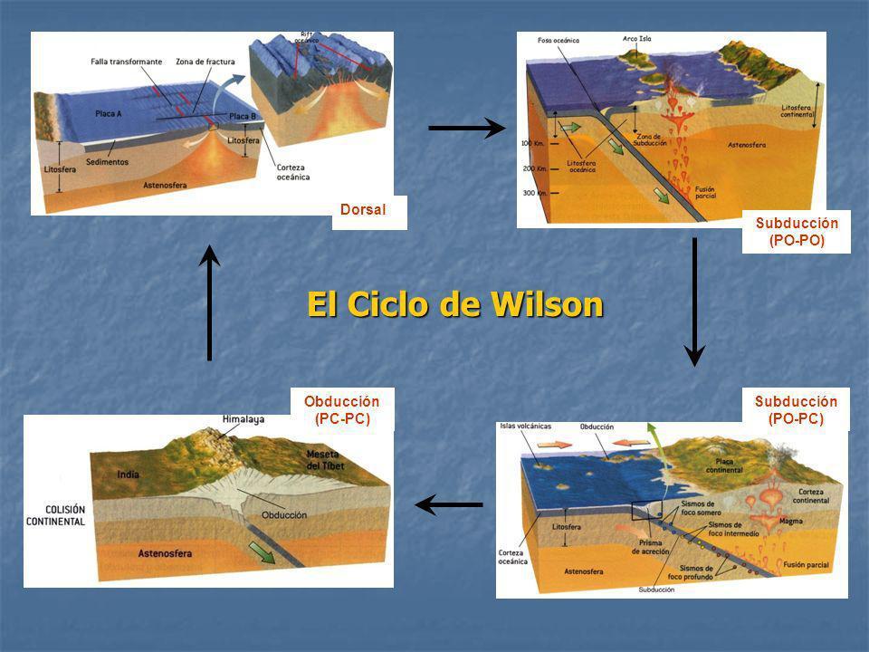 El Ciclo de Wilson Dorsal Subducción (PO-PO) Obducción (PC-PC)