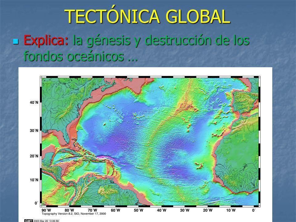TECTÓNICA GLOBAL Explica: la génesis y destrucción de los fondos oceánicos …
