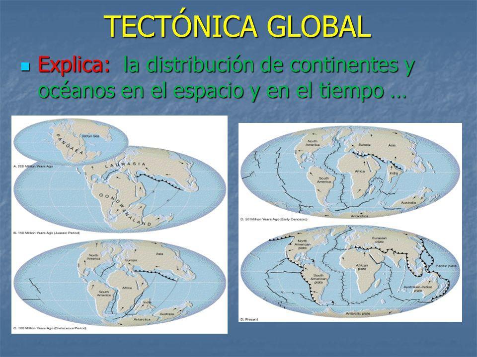 TECTÓNICA GLOBAL Explica: la distribución de continentes y océanos en el espacio y en el tiempo …