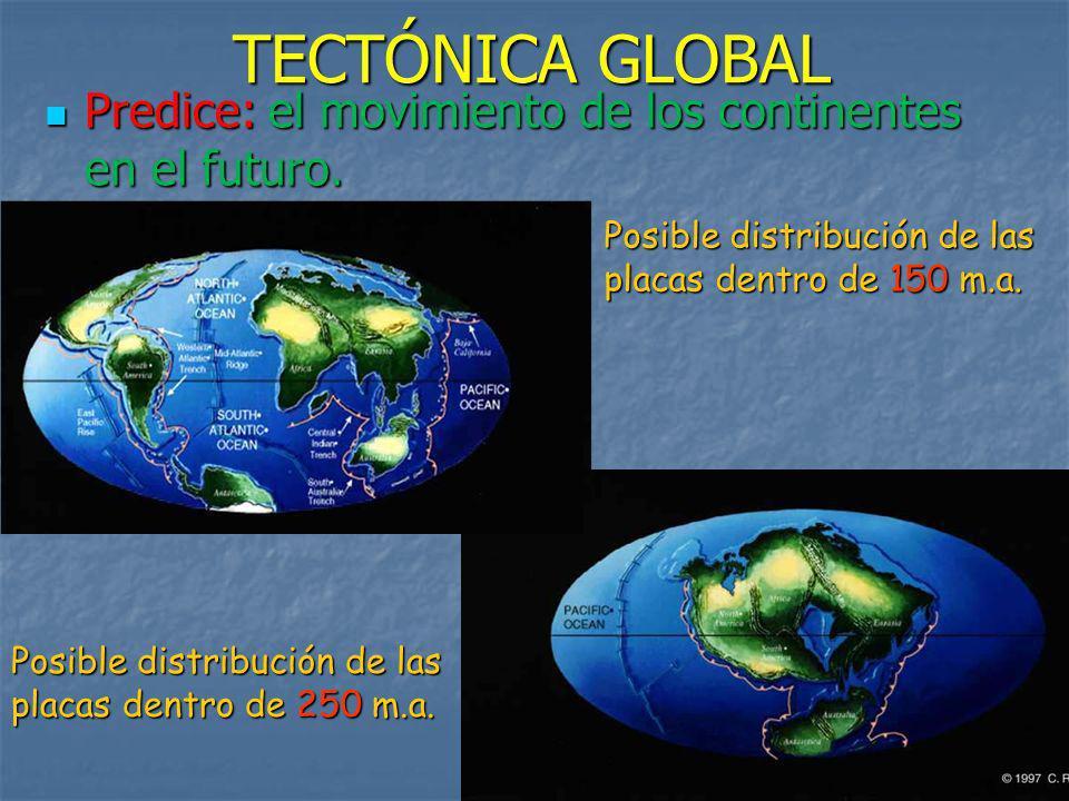 TECTÓNICA GLOBAL Predice: el movimiento de los continentes en el futuro. Posible distribución de las placas dentro de 150 m.a.