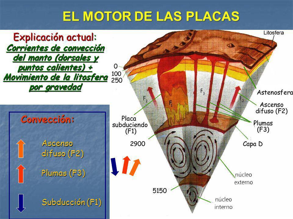 EL MOTOR DE LAS PLACAS Explicación actual: Corrientes de convección del manto (dorsales y puntos calientes) + Movimiento de la litosfera por gravedad.