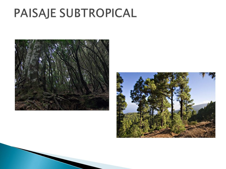 PAISAJE SUBTROPICAL