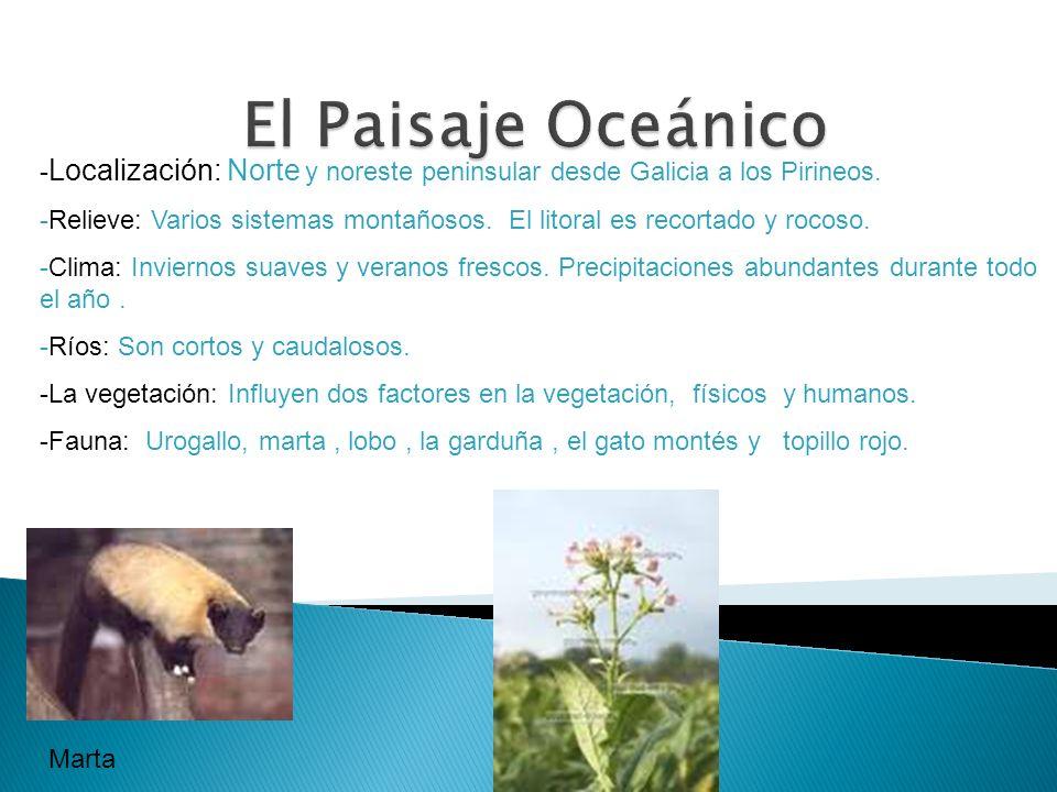 El Paisaje Oceánico -Localización: Norte y noreste peninsular desde Galicia a los Pirineos.