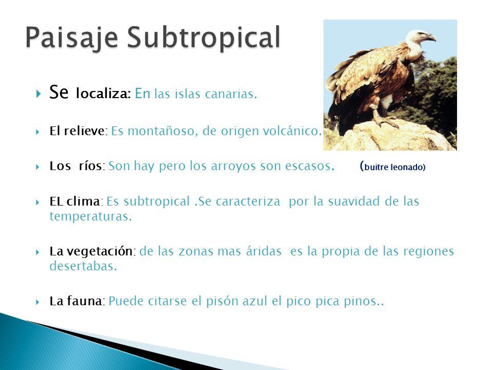Paisaje Subtropical Se localiza: En las islas canarias.