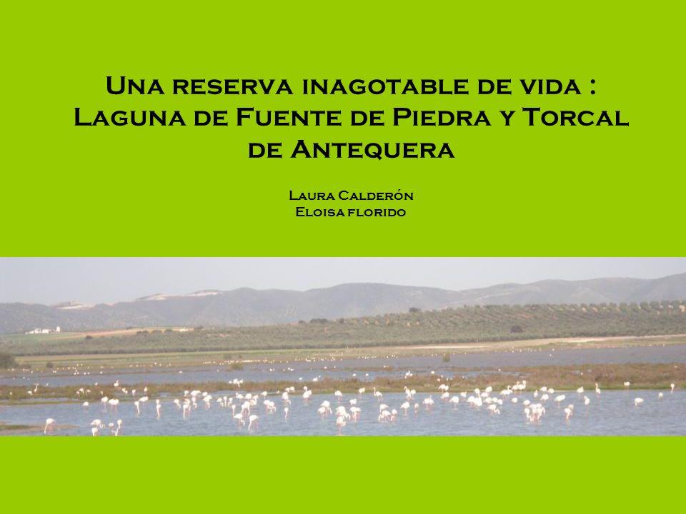 Una reserva inagotable de vida : Laguna de Fuente de Piedra y Torcal de Antequera Laura Calderón Eloisa florido