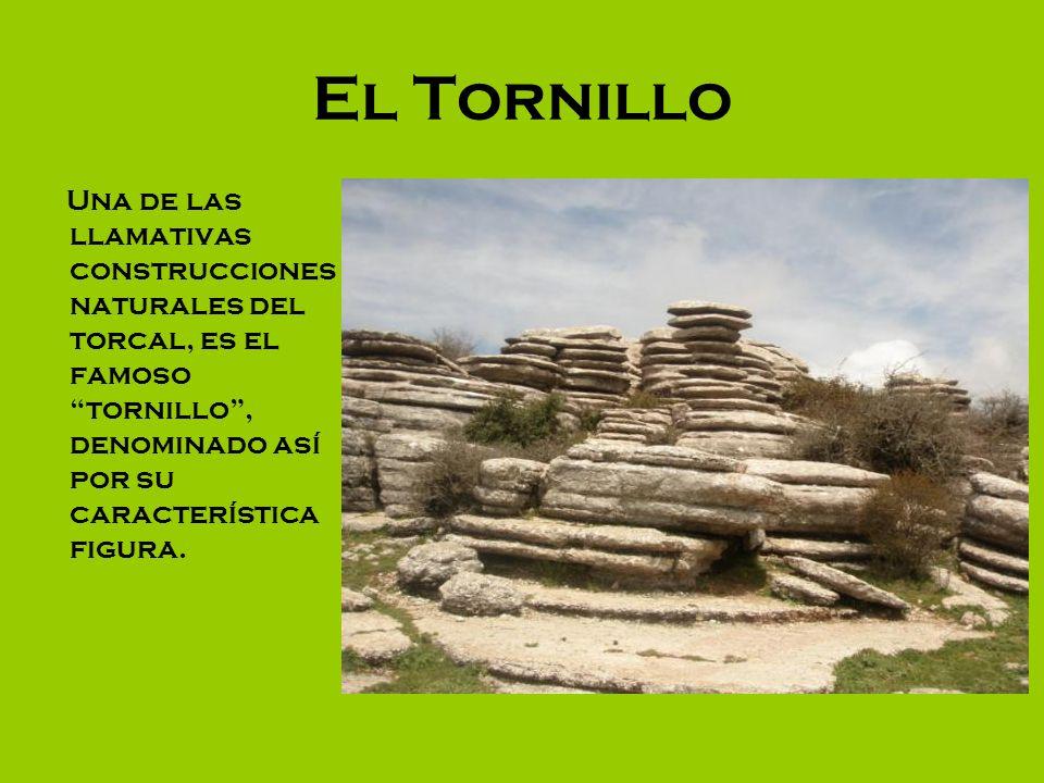 El Tornillo Una de las llamativas construcciones naturales del torcal, es el famoso tornillo , denominado así por su característica figura.