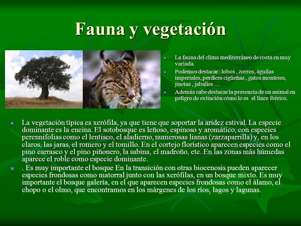Fauna y vegetación La fauna del clima mediterráneo de costa en muy variada.