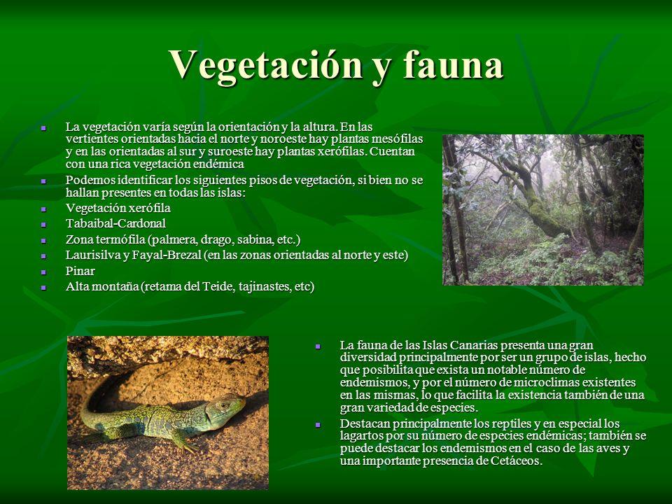 Vegetación y fauna