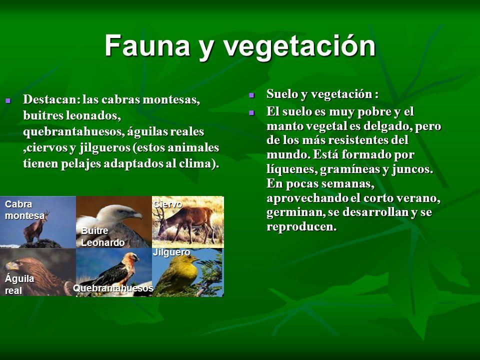 Fauna y vegetación Suelo y vegetación :