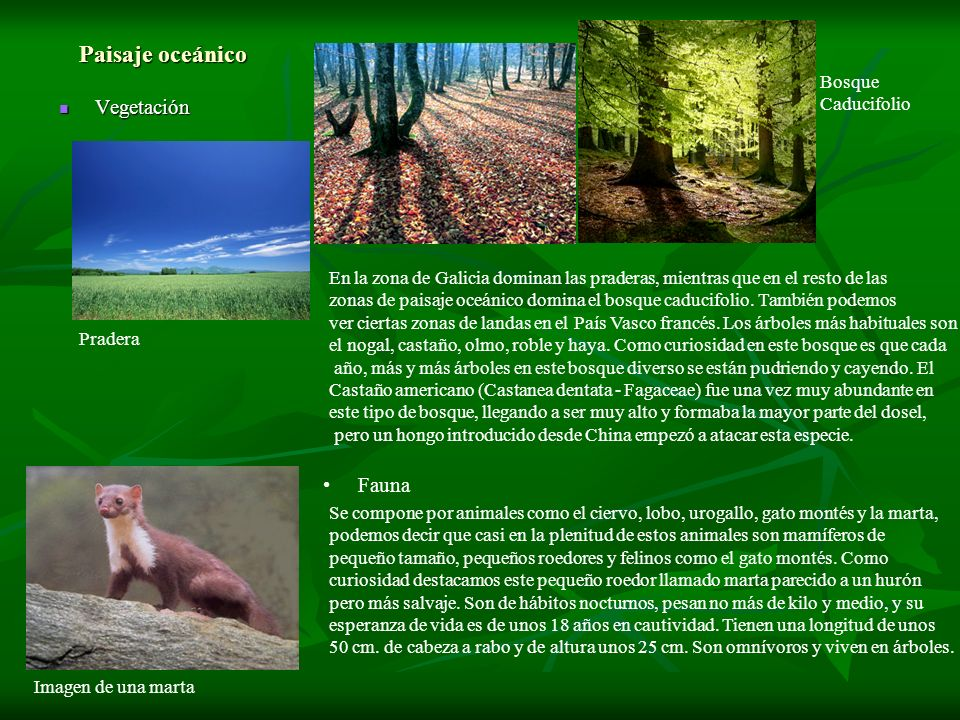 Paisaje oceánico Vegetación Fauna Bosque Caducifolio
