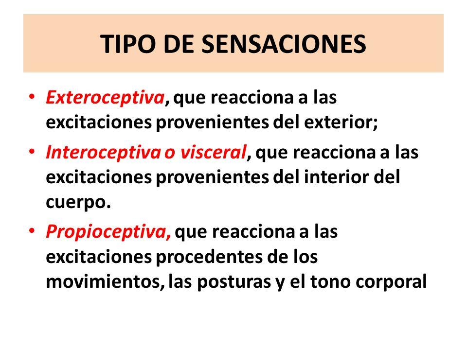 TIPO DE SENSACIONESExteroceptiva, que reacciona a las excitaciones provenientes del exterior;