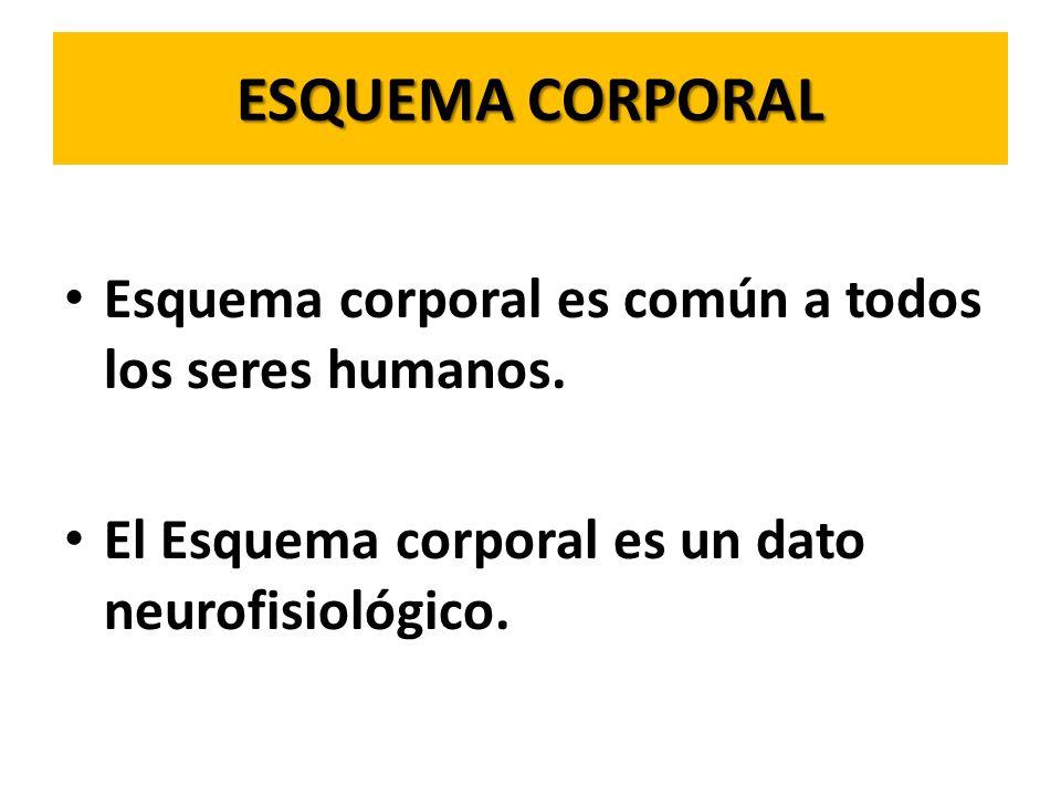 ESQUEMA CORPORAL Esquema corporal es común a todos los seres humanos.