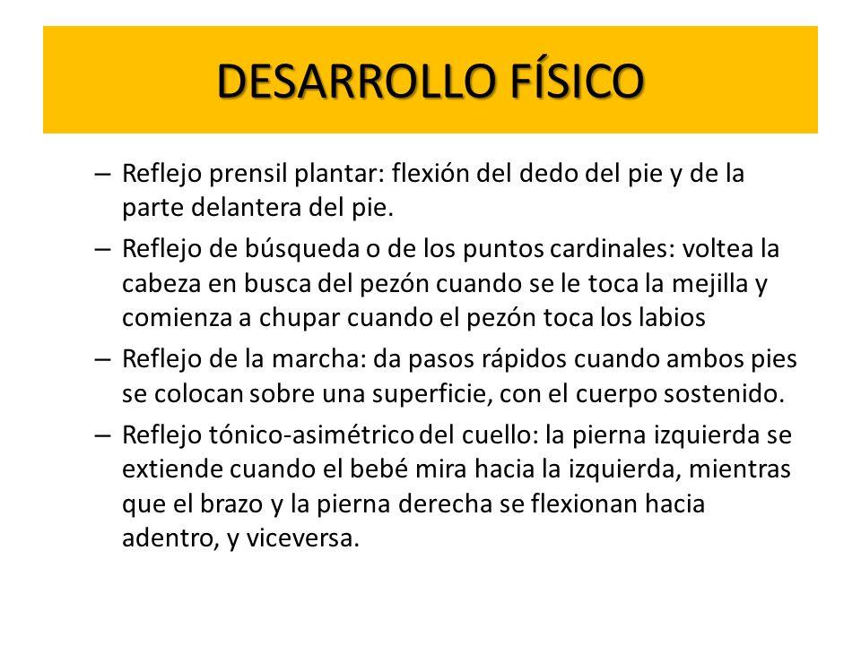 DESARROLLO FÍSICO Reflejo prensil plantar: flexión del dedo del pie y de la parte delantera del pie.