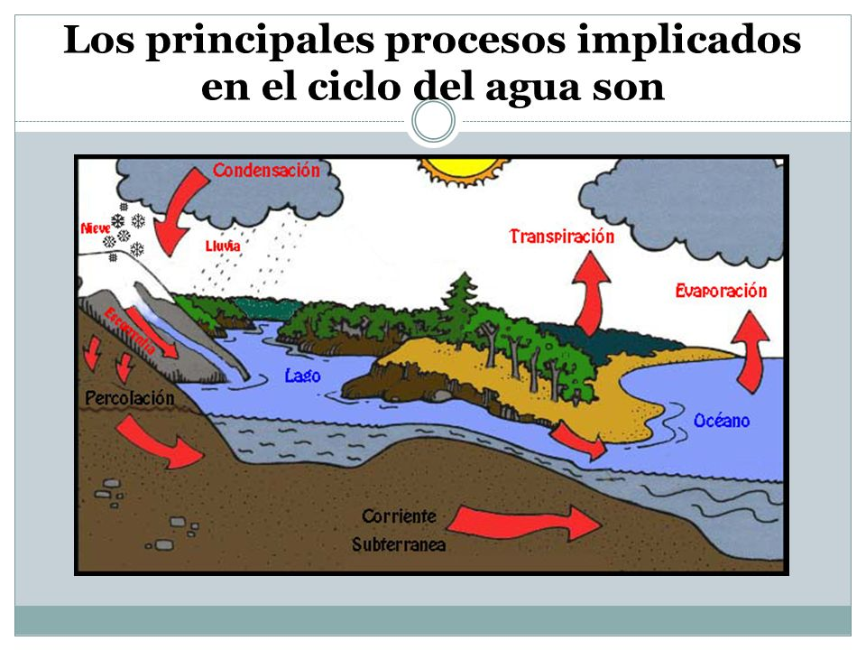 Los principales procesos implicados en el ciclo del agua son