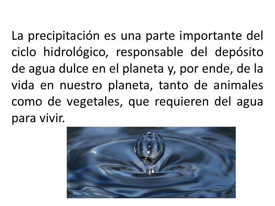 La precipitación es una parte importante del ciclo hidrológico, responsable del depósito de agua dulce en el planeta y, por ende, de la vida en nuestro planeta, tanto de animales como de vegetales, que requieren del agua para vivir.