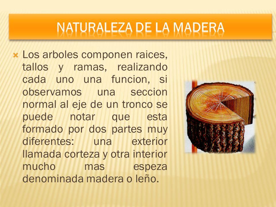 Naturaleza De La Madera