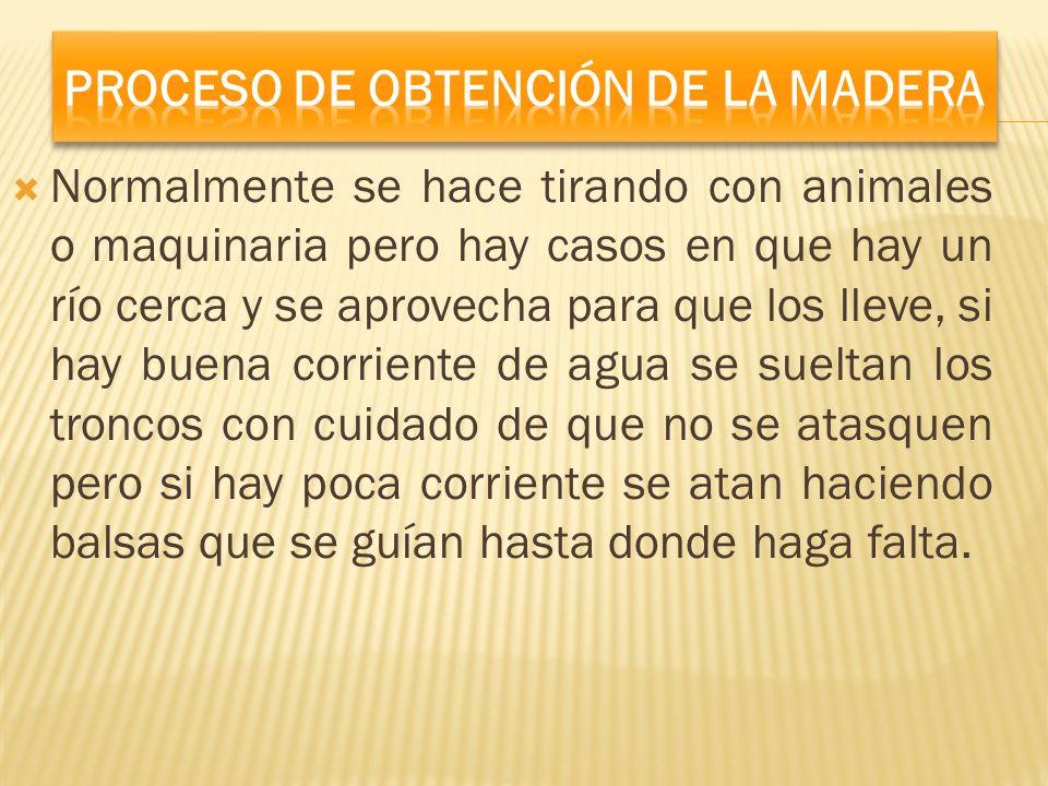 Proceso De Obtención De La Madera