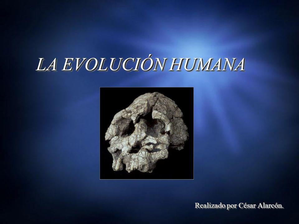 Realizado por César Alarcón.