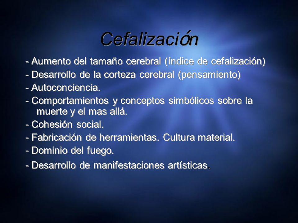 Cefalización - Aumento del tamaño cerebral (índice de cefalización)